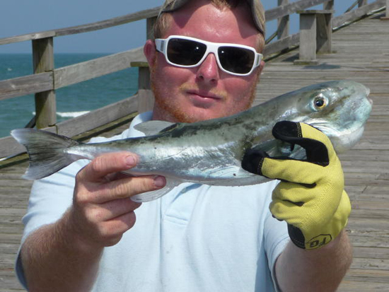 Affordable charters fishing report 5 21 12 affordable for Kure beach fishing report