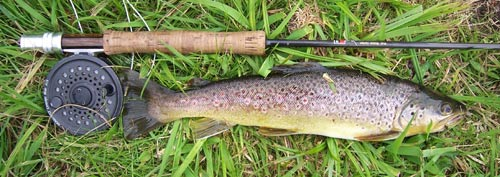 sm-browntrout.jpg