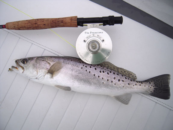 trout2.jpg
