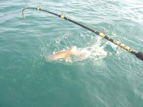 Rod man report september 5 2007 rod man fishing report for Shark fishing rod