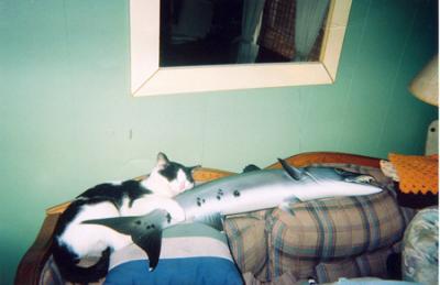 100-5_image_ea_fishing5-3-2006.png